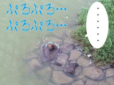 鴨ぷるぷる