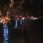 桜まつり冬-大阪狭山市狭山池イルミネーション2016年