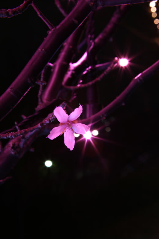 あなたと狭山池『冬の花』
