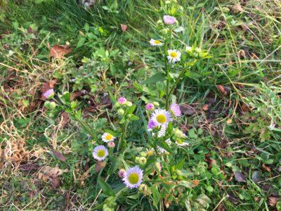 狭山池1月に咲く花
