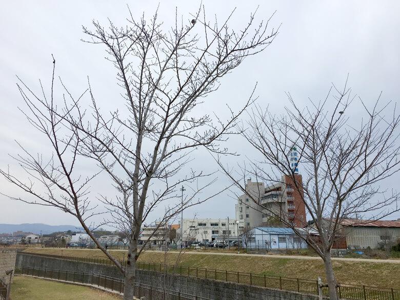 風で木が揺れてるポン☆