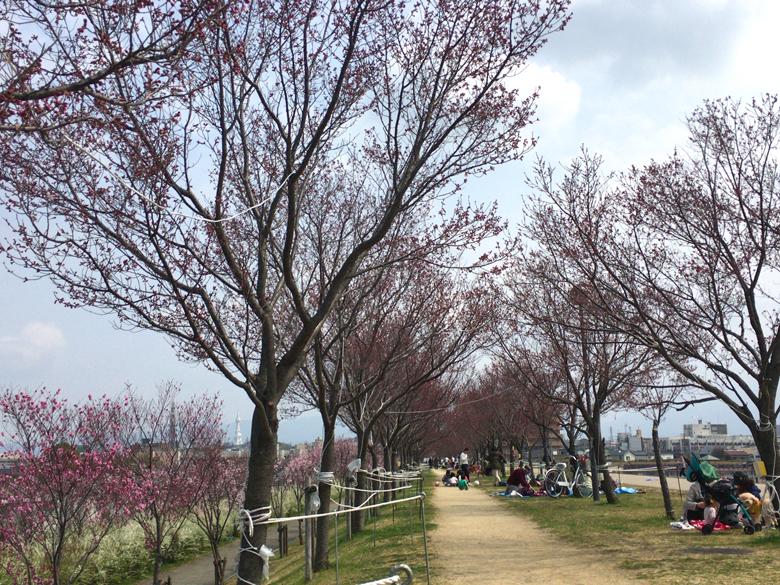 桜は、ちらほら咲いてるポン(*^ω^*) みんな笑顔で、美味しそうにご飯を食べてるポーン(*´艸`*)