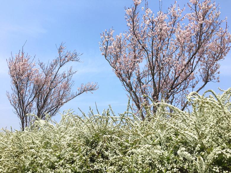 ハチも、花の蜜を求めて飛んでるポン☆