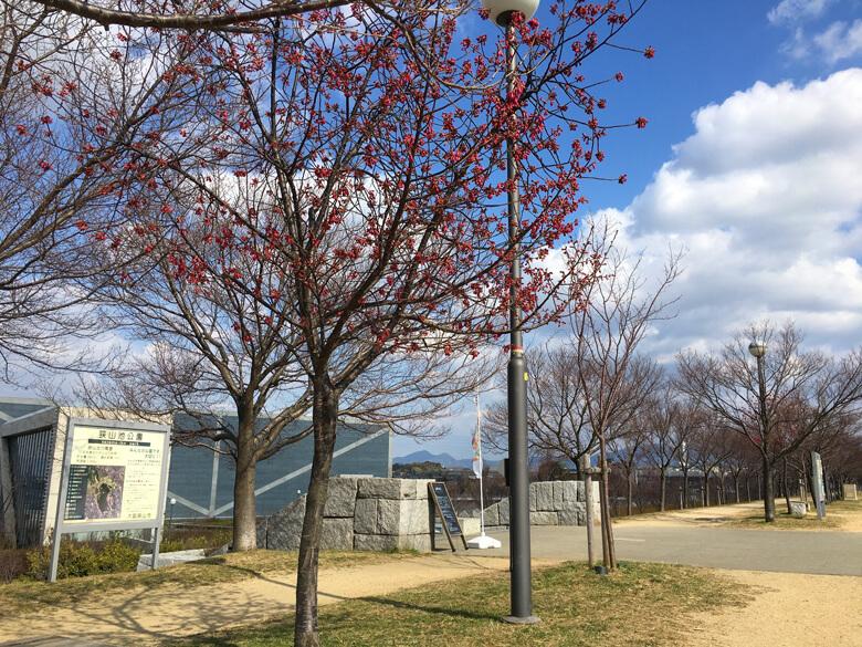 ビュービュー、桜の枝がゆ〜らゆらだポン☆