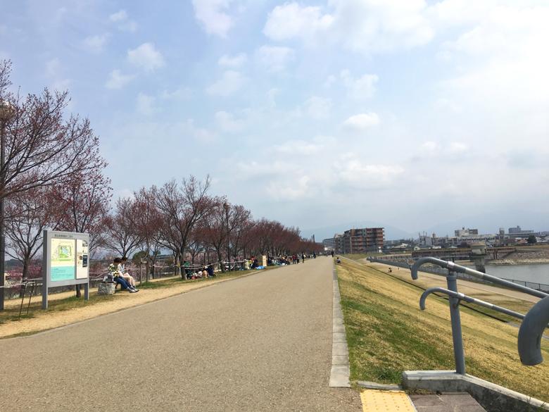 北堤の桜の木の下は、たっくさんの人が、の〜んびり過ごしてるポン(*^ω^*)