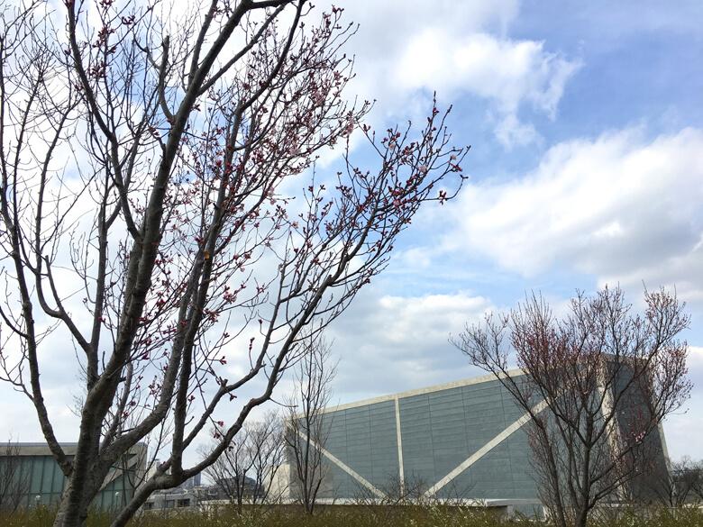 桜がポンポン咲いてるポン☆