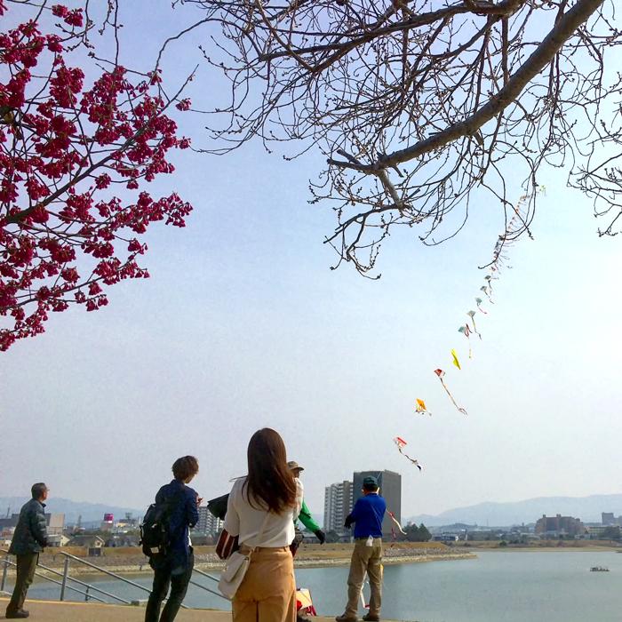 桜と連凧と狭山池
