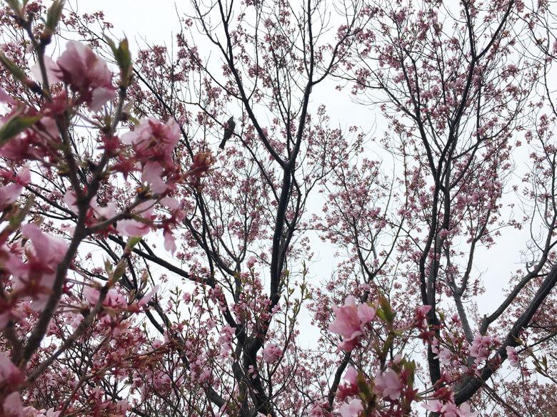 トリが、風に揺られながら、花の蜜を吸ってるポン(*^ω^*)