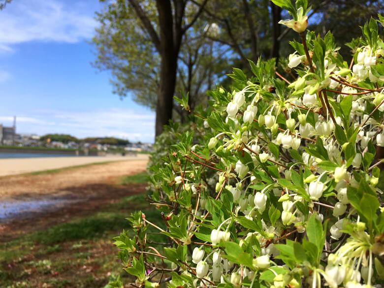 小さい花、いっぱいポン(*´艸`*)