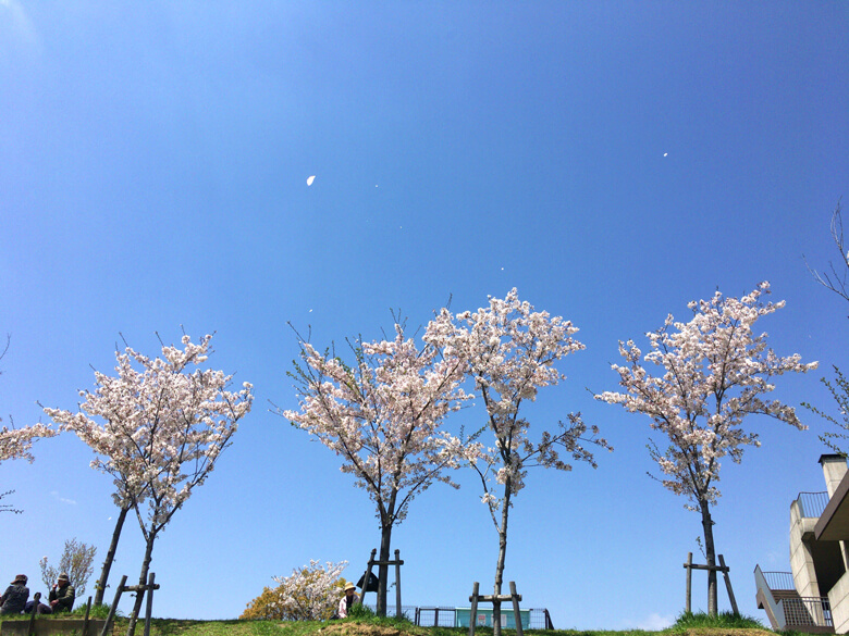 青空にピンクの桜が、舞ってるポン☆