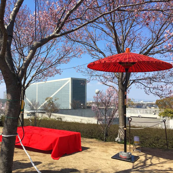 桜の木の下でお抹茶を
