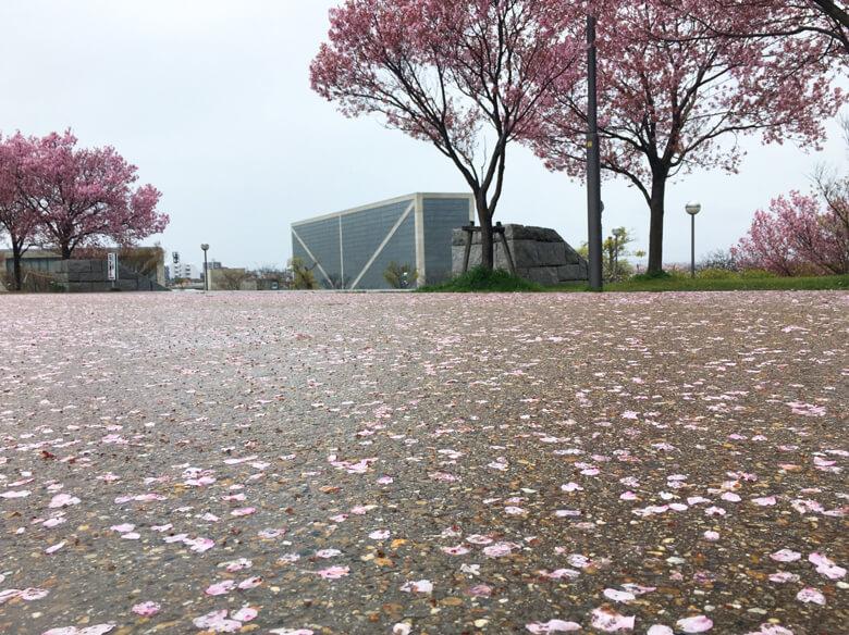 雨、風ピューピューで 今日も、桜がヒラヒラ落ちてるポン☆