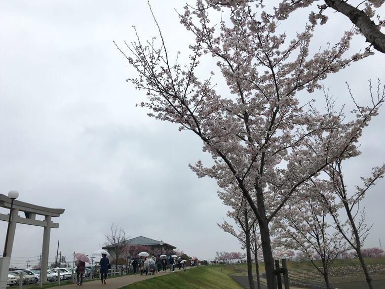 たくさんの人が狭山池に来てるポン(*^ω^*)
