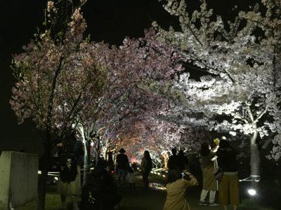 第9回 桜まつり春ライトアップ(最終日)