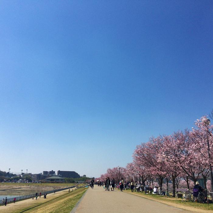 ポカポカ陽気の桜