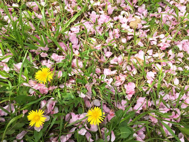 黄色とピンクがキレイだポン☆