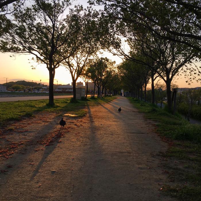 狭山池の夕日とハト