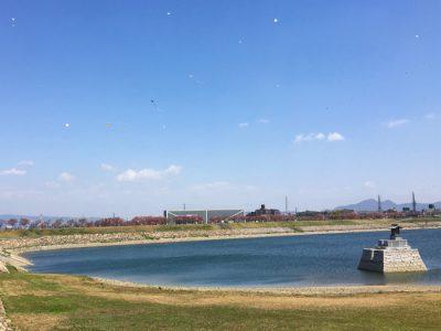 狭山池の青空に舞う桜