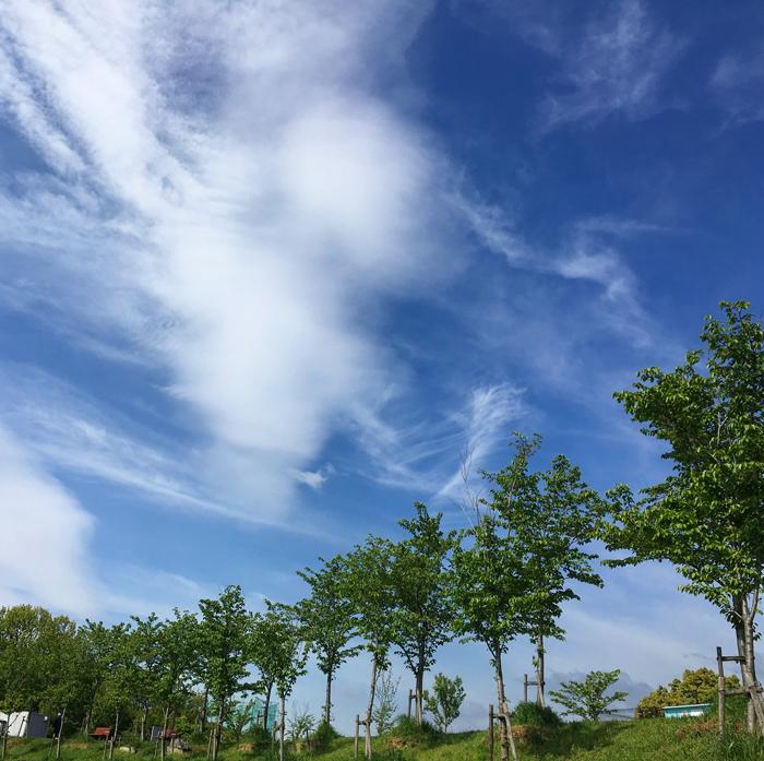 狭山池の青空と緑