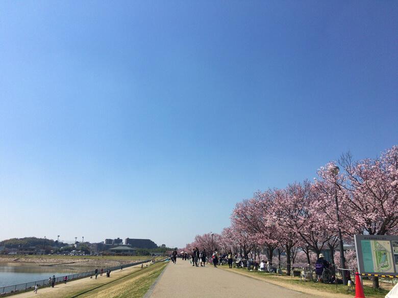 今日もたくさんの人が、花見に来てるポーン(((o(*゚▽゚*)o)))
