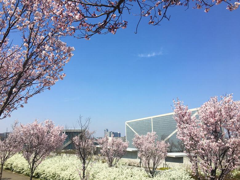 桜と雪柳、キレイだポーン(((o(*゚▽゚*)o)))♡