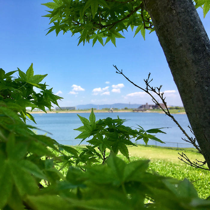 緑の紅葉と狭山池と空の青