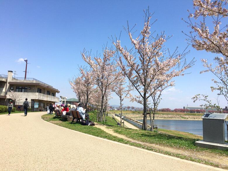 桜の下で、花見だポン☆ みんな美味しそうに食べてるポン(*´艸`*)