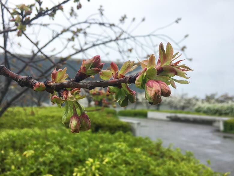 また、キレイな花が咲くのが楽しみだポン(*´艸`*)