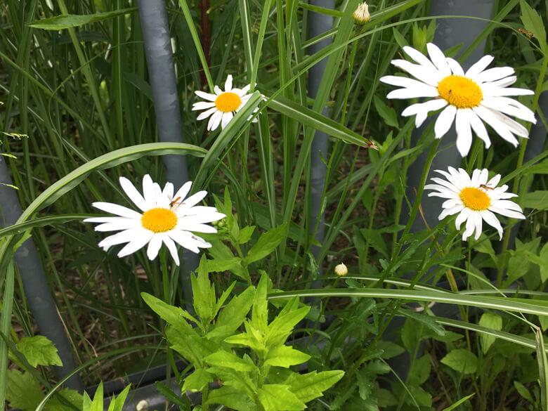 白い花にハチが来たポンよ〜(*゚▽゚*)