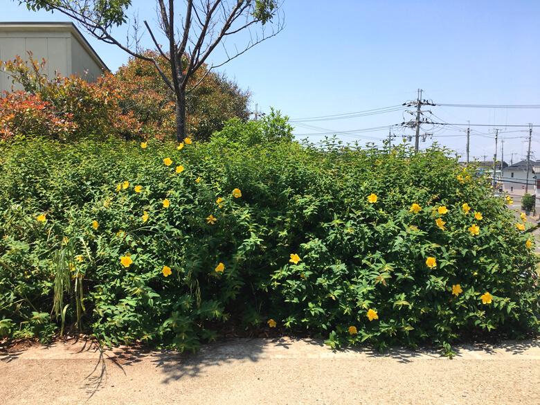 いっぱい咲いてるポン(*^ω^*)