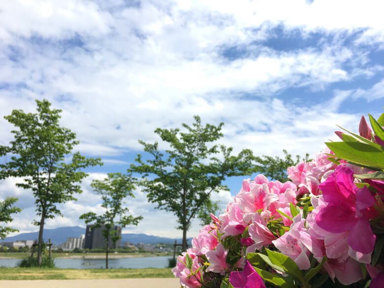 狭山池の青い空とツツジがポン☆