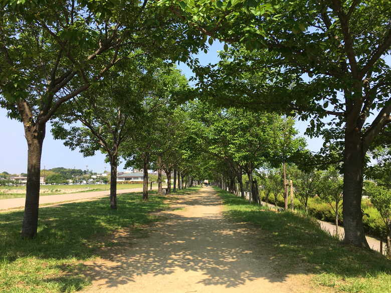 桜の葉っぱがニョキニョキ☆、木かげのトンネル通るポーンヽ(*゚▽゚*)ノ=3