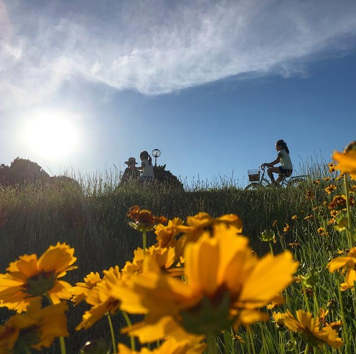 狭山池の青空と黄色い花