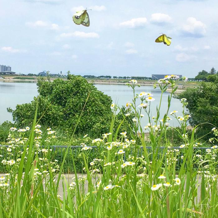狭山池とチョウ