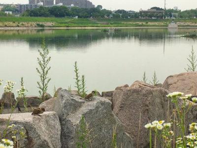 狭山池のスズメ