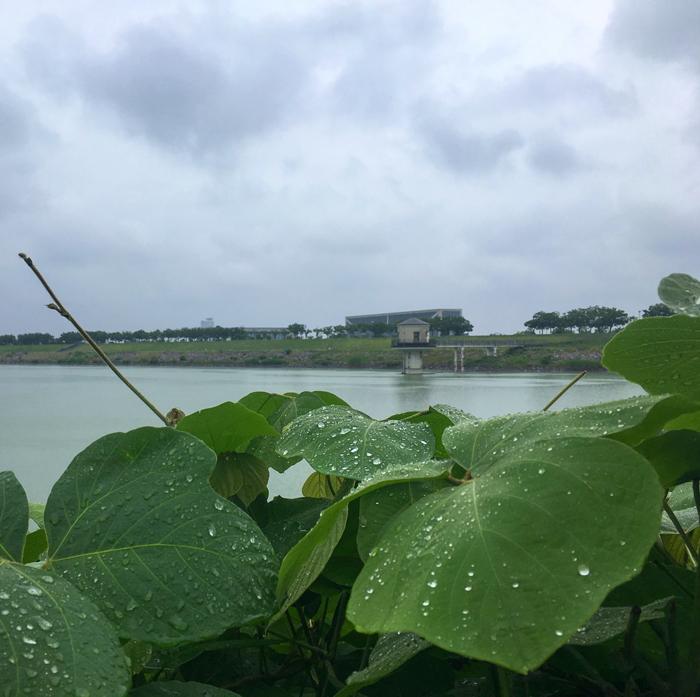梅雨の狭山池