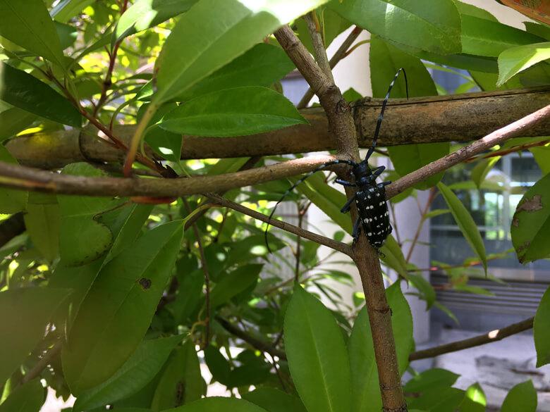 ポポ!∑(=゚ω゚=;) 黒くて大きい虫みっけだポン☆ ゆっくり歩いてるポンよ〜☆