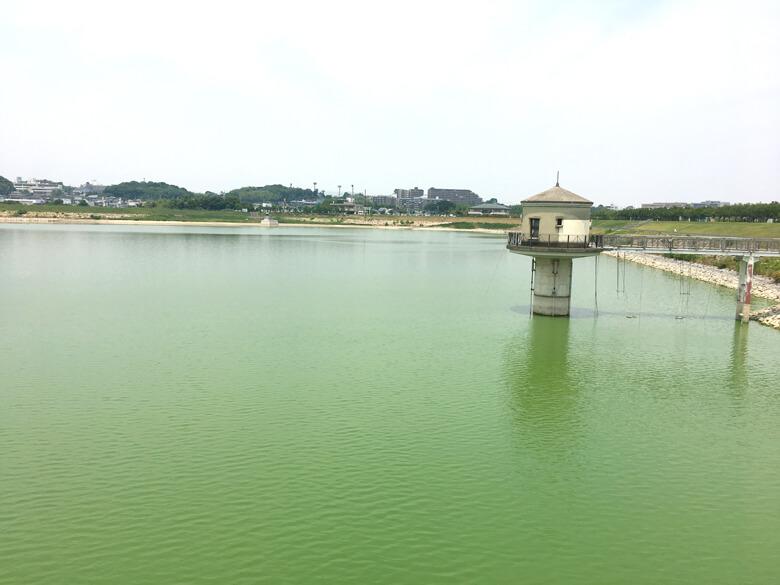 狭山池、緑色だポン☆