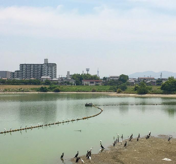 狭山池の鳥たち