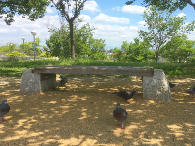 狭山池とハト