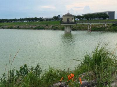 狭山池とユリの花