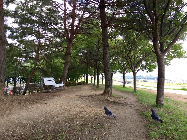 ハトたちも、木かげで休憩だポン(*^ω^*)