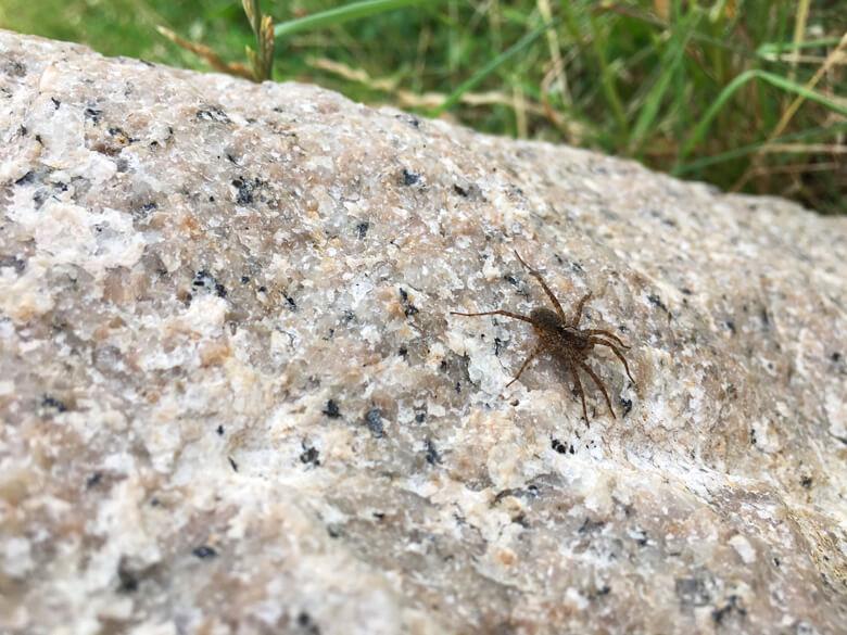 クモがポン☆