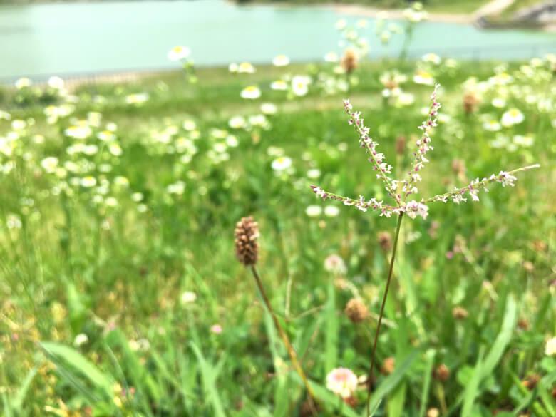 ポ☆ 小さい花みっけだポーンo(^▽^)o 5本の茎が、キラキラ星に見えるポン☆(๑˃̵ᴗ˂̵)