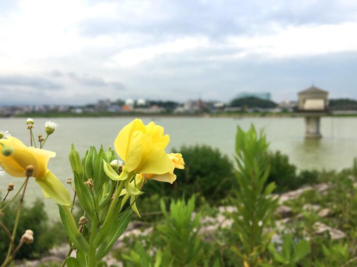 黄色い花、みっけだポン☆