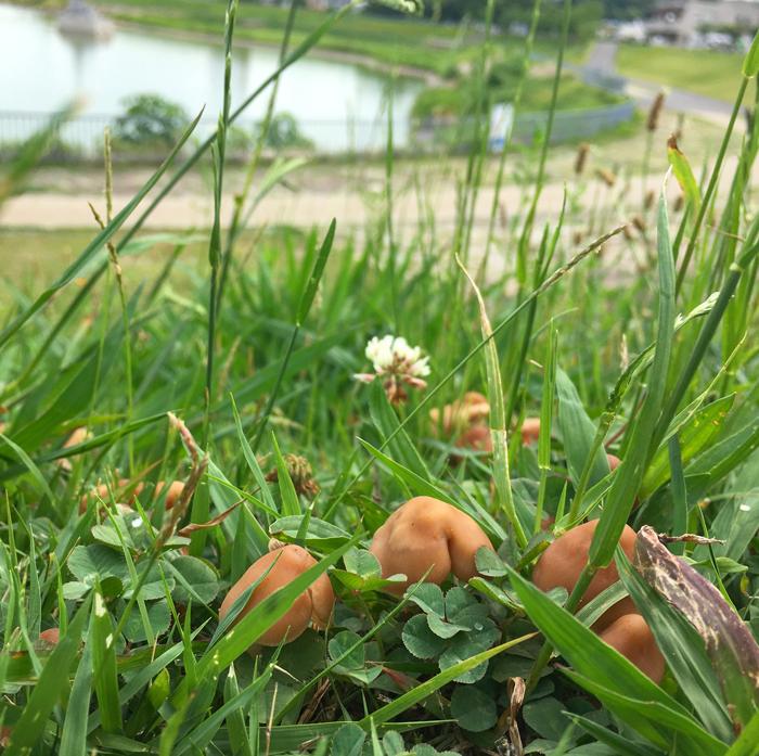 狭山池のキノコ