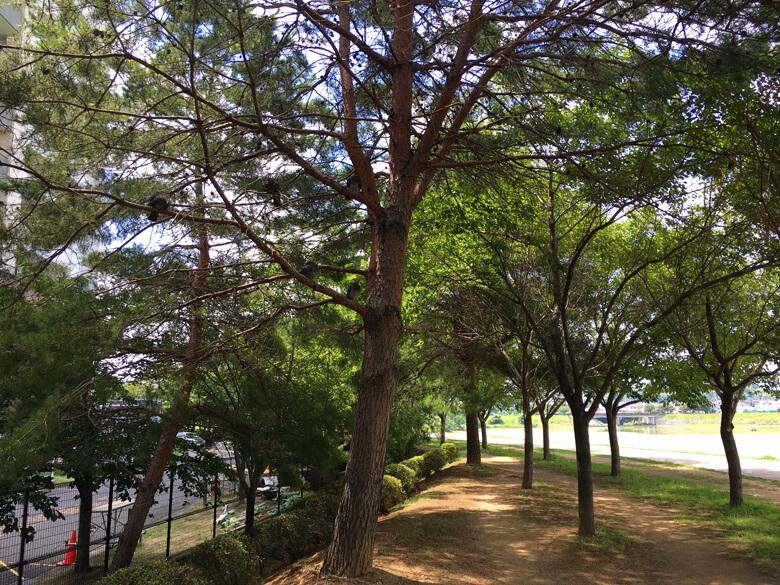 今日も、木かげの道、歩くポン(*^ω^*)
