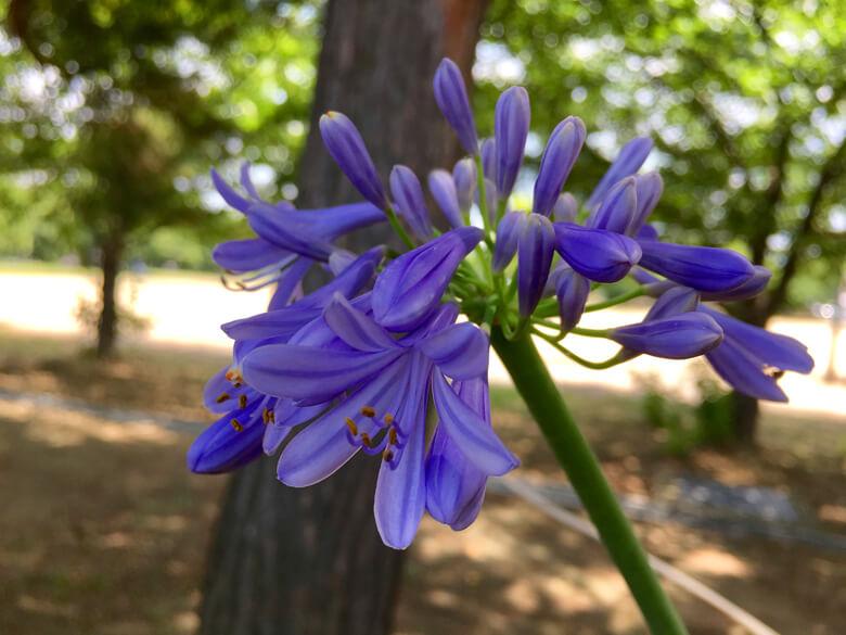 紫の花、みっけだポン☆ キレイだポーン☆(*゚▽゚*)♪