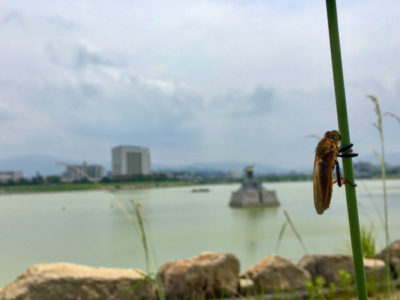 狭山池とハチ