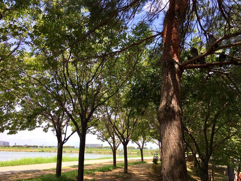 ハトたちも、木かげで休憩だポン(*´ω`*)